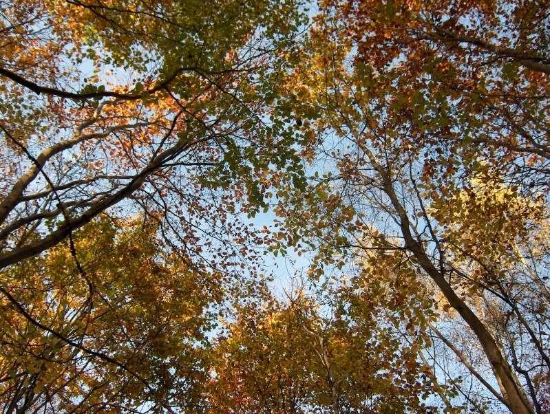Balade en forêt Hpim3951