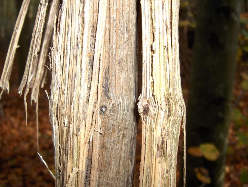 Balade en forêt Hpim3952