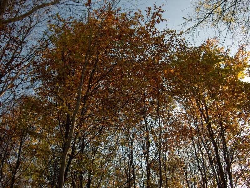 Balade en forêt Hpim3953