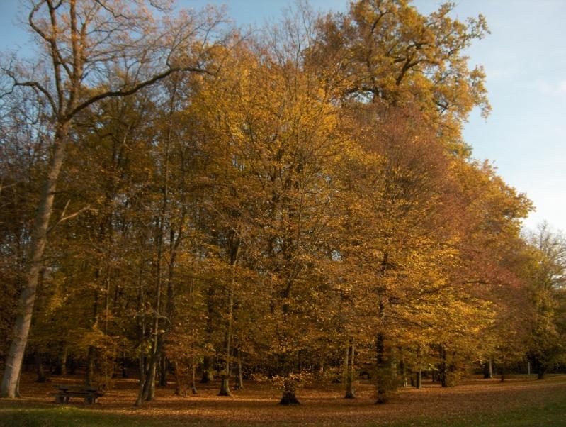 Balade en forêt Hpim3955