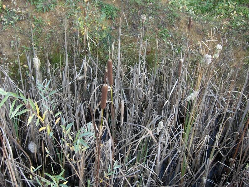 Balade en forêt Hpim3956