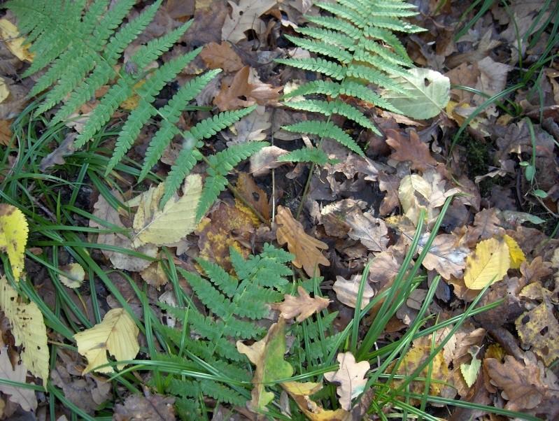 Balade en forêt Hpim3957