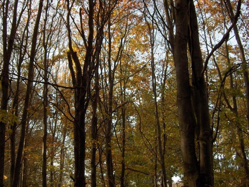 Balade en forêt Hpim3961