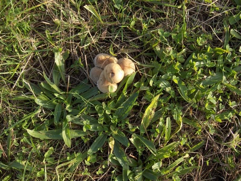 Le monde des champignons... Hpim3979