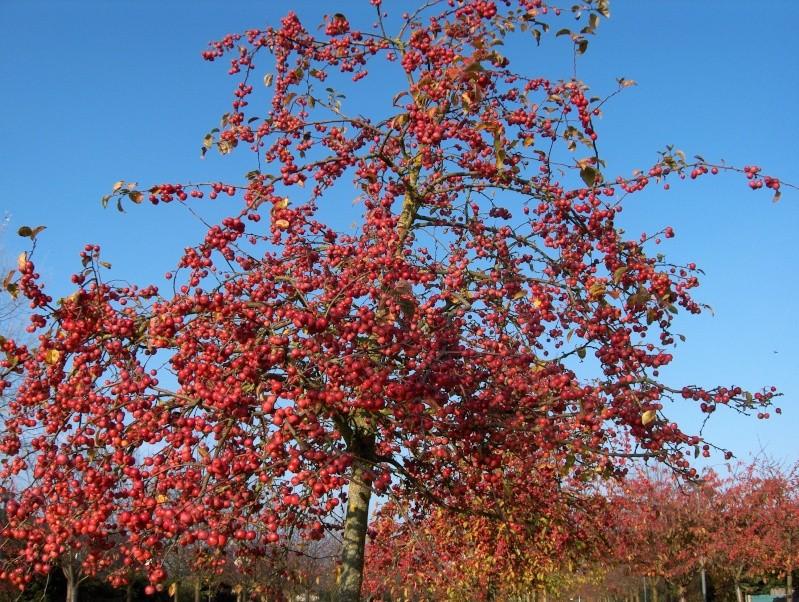 couleurs d'automne Hpim4018