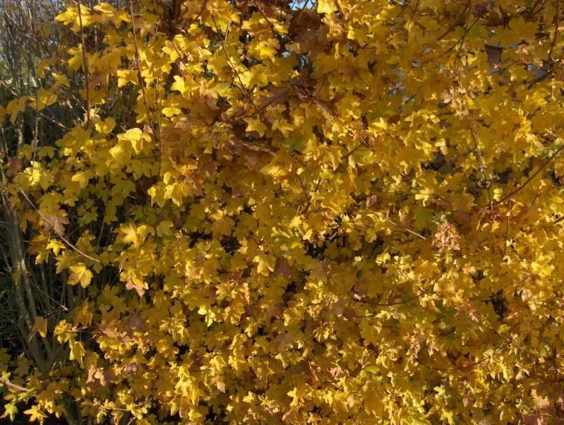 couleurs d'automne Hpim4019