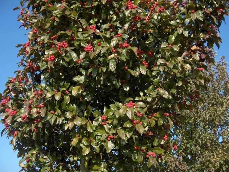 couleurs d'automne Hpim4024
