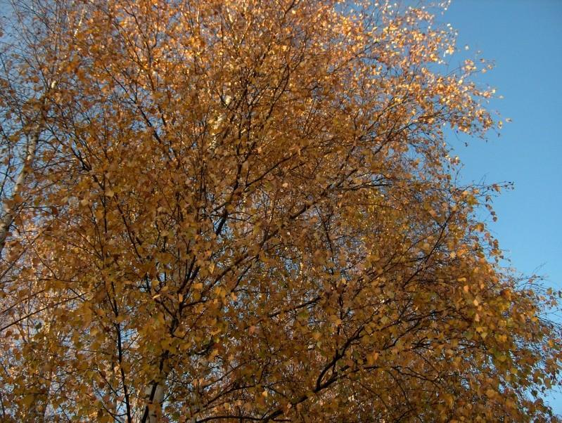 couleurs d'automne Hpim4025