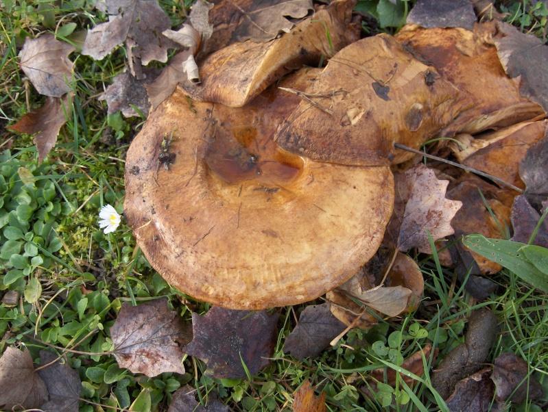 Le monde des champignons... Hpim4039