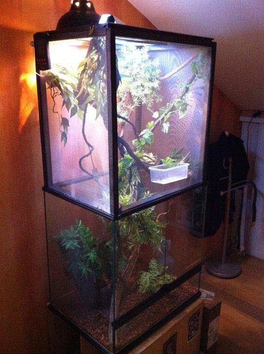 Agrandissement de terrarium! Marley10