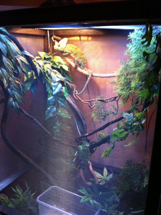 Agrandissement de terrarium! Marley11