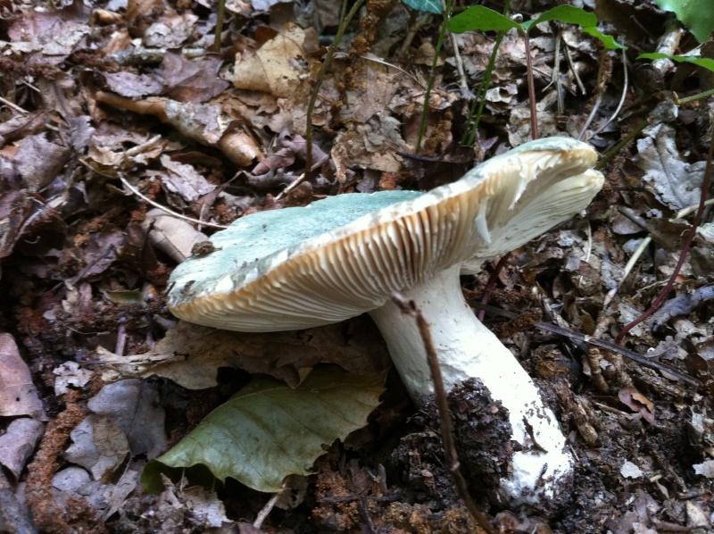 A la recherche d'info sur des champignons Img_0529