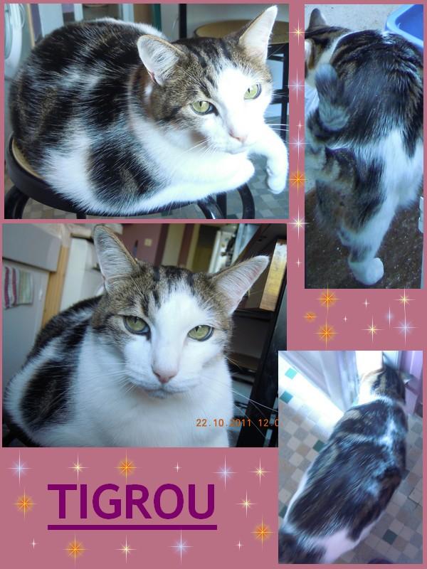 Tigrou et Mysti Tgrou10