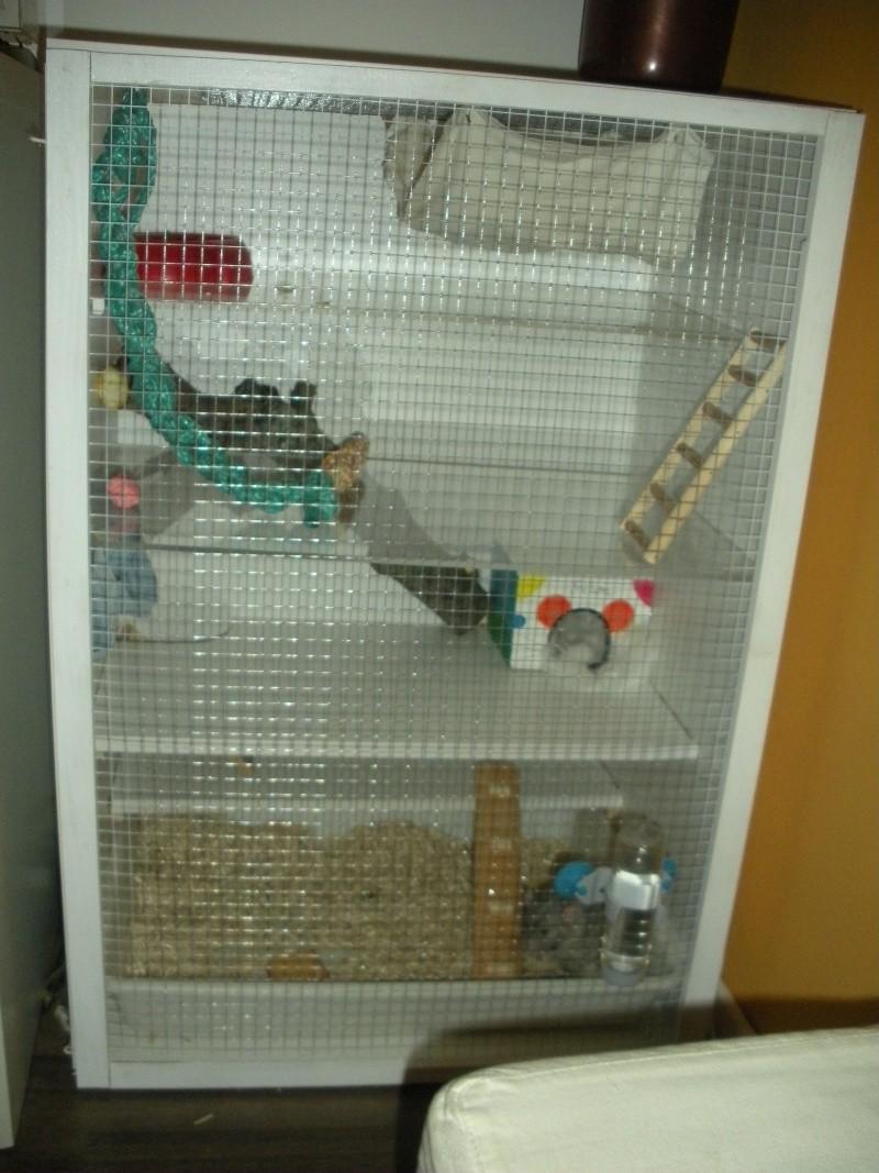 vends cage maison Dscn2610