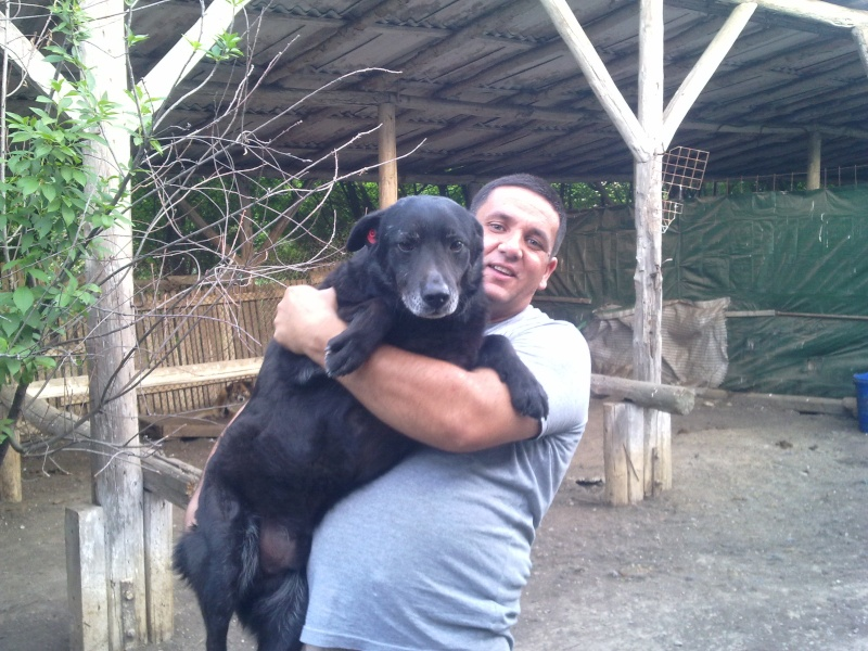 Baloo, mâle, né en 2008, type labrador  02052010