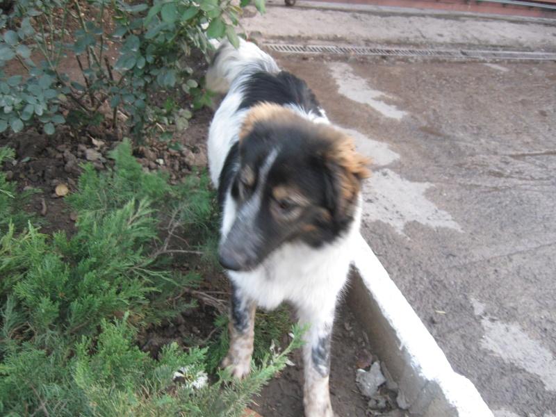 Spot, né en avril 2012, abandonné à l'âge de 3 semaines Pictur32