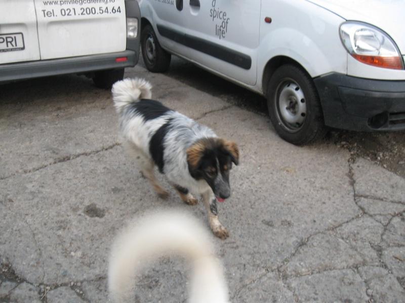 Spot, né en avril 2012, abandonné à l'âge de 3 semaines Pictur34