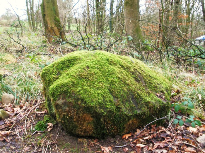 SPRING WOODS STONE near Whalley, Lancashire Spring11