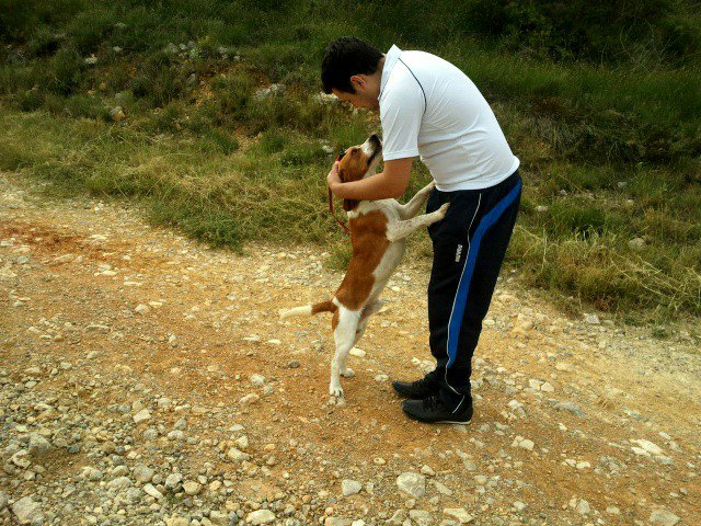 JOHNNY, beagle mâle, 5 ans (en FA dans le 11) - Page 2 24837210