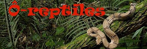 mes rhacodactylus - Page 3 Captur15