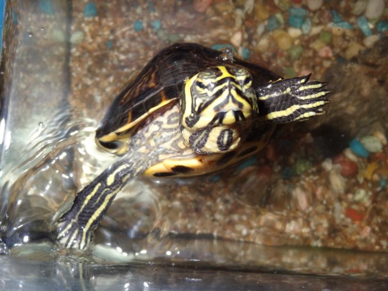 Franklin ma tortue aquatique de 7ans Mes_an10