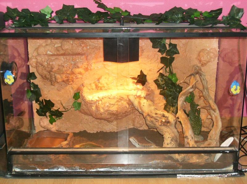 Terra de Crusoé avec le décors Nouvea10
