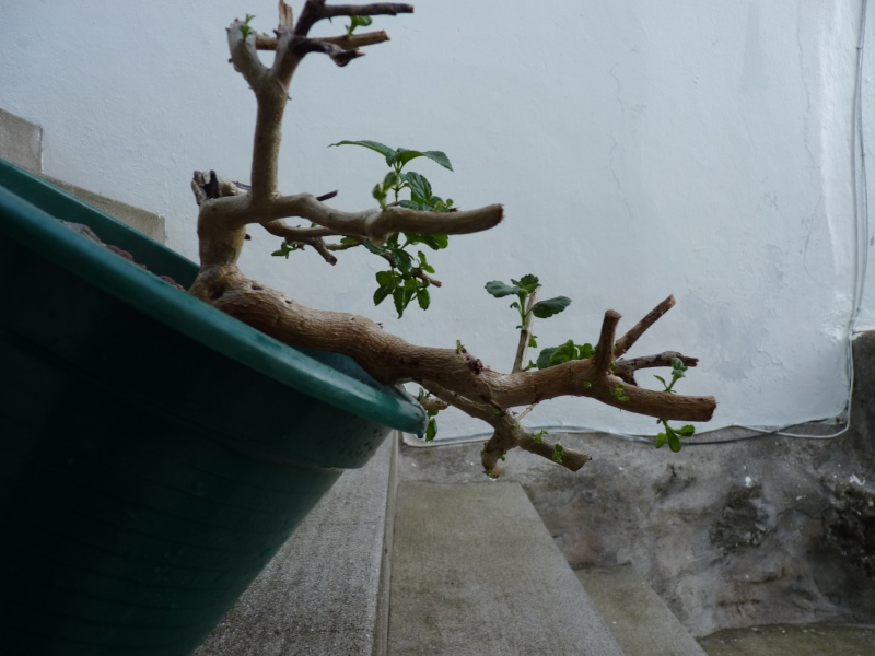 Opinion about this yamadori P1000010