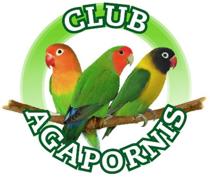 Club Agapornis