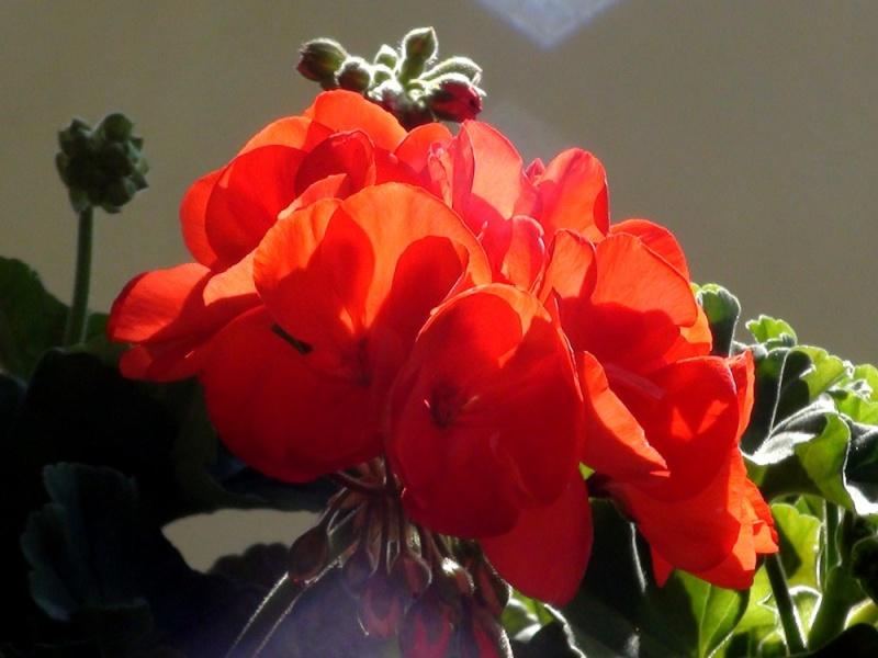 Flore du massif Dsc00318