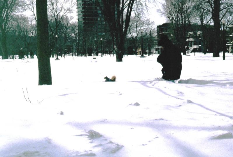 Un après-midi d'hiver au parc Copie_15