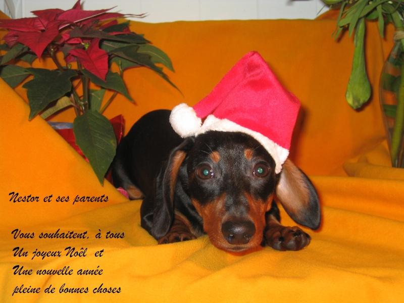 Bonnes Fêtes et Meilleurs Vœux à tous pour 2012 Joyeux10
