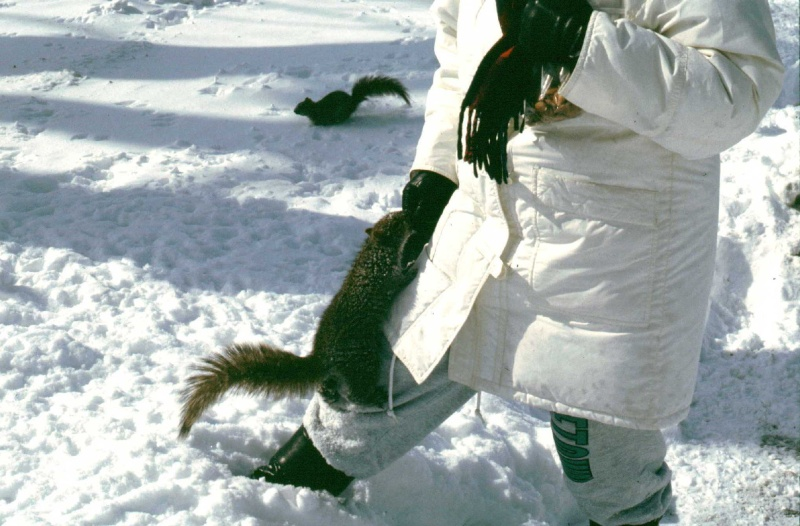 Un après-midi d'hiver au parc Mg_17614