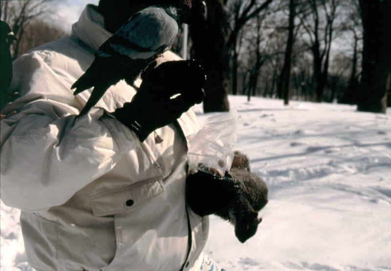 Un après-midi d'hiver au parc Mg_17615