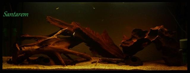 240l Biotope Amazonien. P1070310