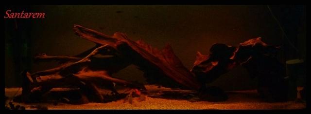 240l Biotope Amazonien. P1070311