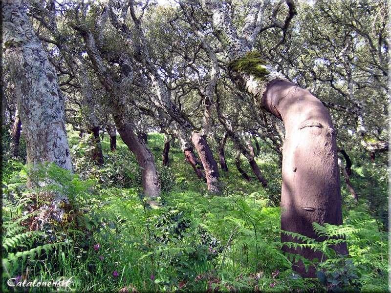 Orchidées de Sardaigne, avril 2008 Iglesi10