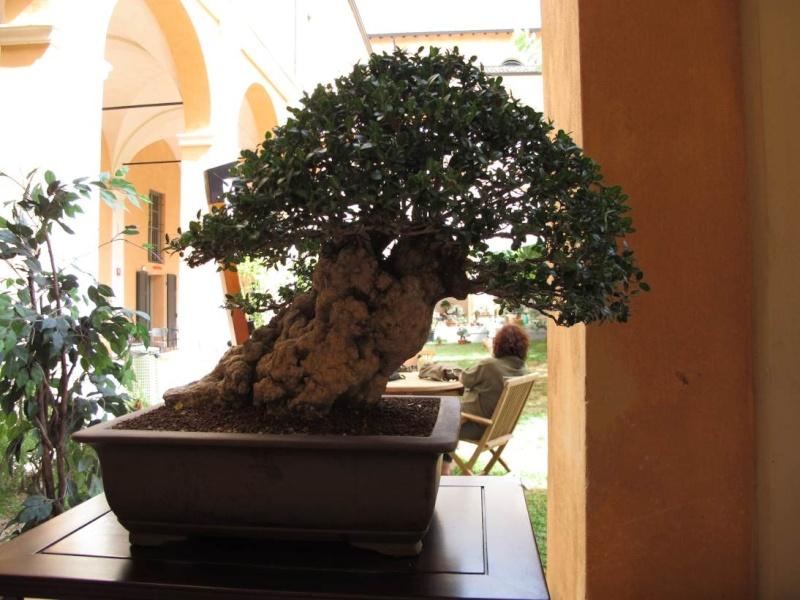 Giareda - Reggio Emilia - Pagina 2 Img_0111