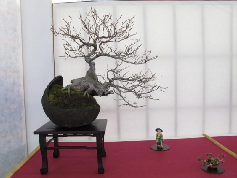 2ª Edizione - Bonsai sotto il cielo d'inverno - Generazioni a Confronto Img_1511