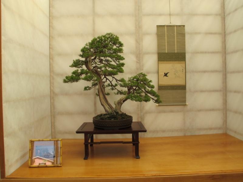 2ª Edizione - Bonsai sotto il cielo d'inverno - Generazioni a Confronto Img_1520