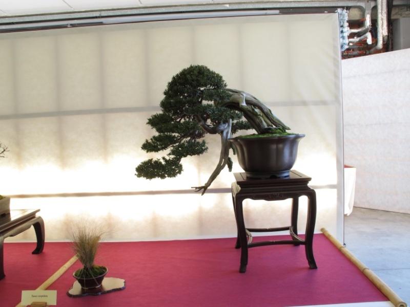 2ª Edizione - Bonsai sotto il cielo d'inverno - Generazioni a Confronto Img_1611