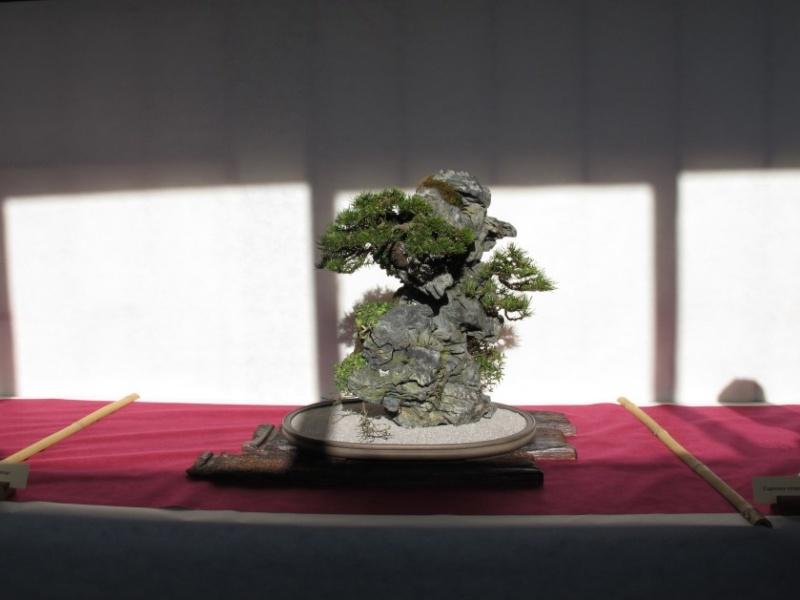 2ª Edizione - Bonsai sotto il cielo d'inverno - Generazioni a Confronto Img_1614