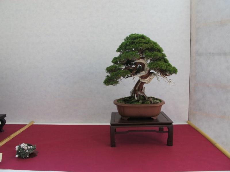 2ª Edizione - Bonsai sotto il cielo d'inverno - Generazioni a Confronto Ito_ki10