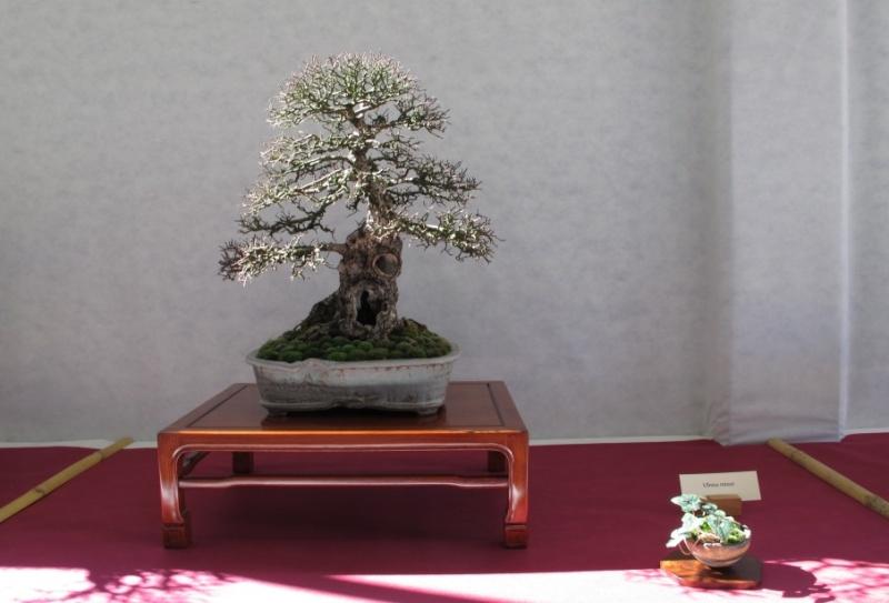 2ª Edizione - Bonsai sotto il cielo d'inverno - Generazioni a Confronto Mio_ol12