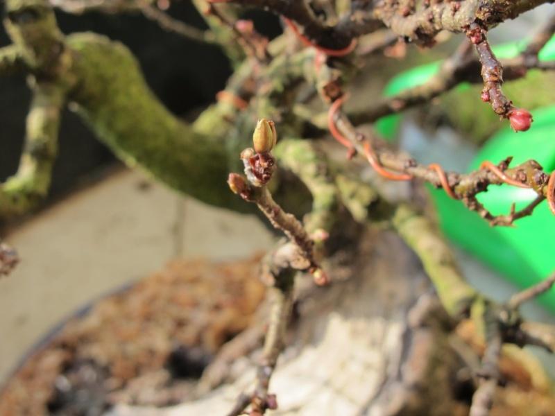 la bellezza della primavera ... Ontano14