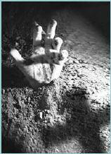 Enterrados Vivos..Catalepsia Catale10