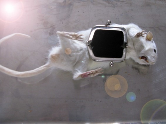 Accesorios de animales disecados Comple10