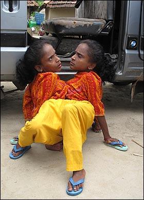 Las hermanas araña Ganga-11