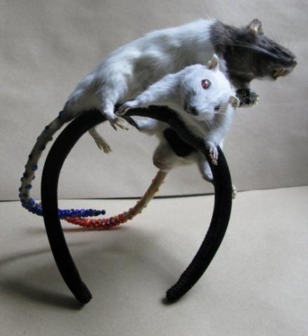 Accesorios de animales disecados Ratas_10