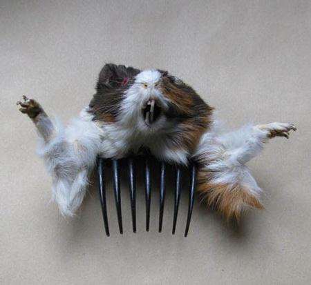 Accesorios de animales disecados Taxide14