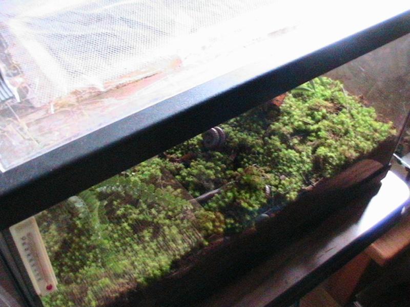Plantes en terra? Photos17